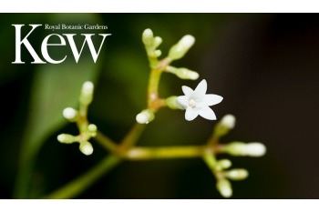 Help Kew to safeguard life on Earth